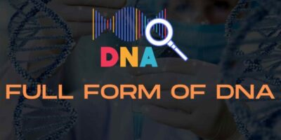 What is full form of DNA?